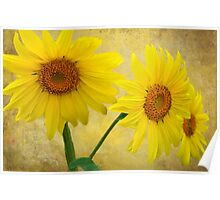 Sunflower Trio Poster