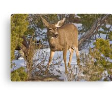 Chatty Deer Canvas Print