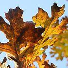 Leaves. by spydergirl13