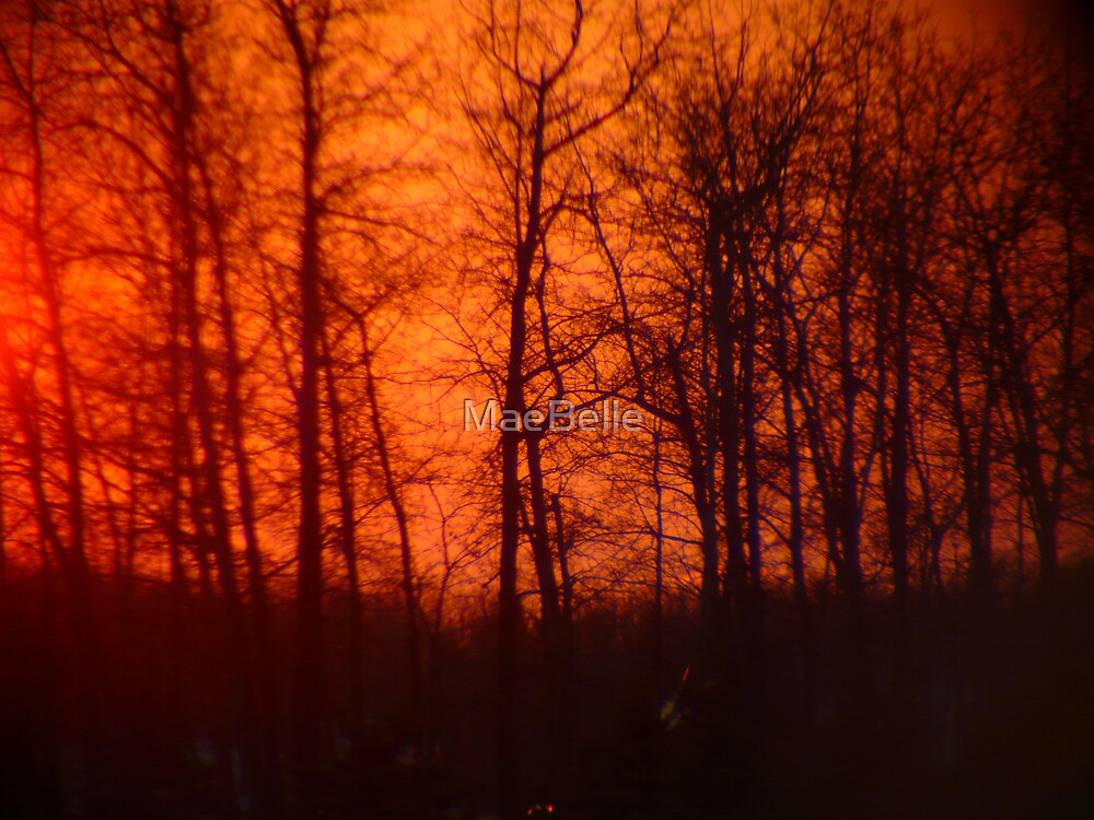 Sunset Behind the Trees by MaeBelle