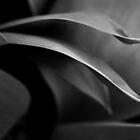Tulip Leaves 08 by Adam Graham