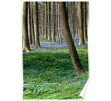 Hallerbos - The Blue Forest Poster