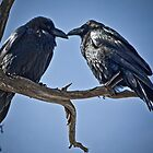 Raven Pair by Jan Cartwright