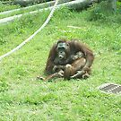 Monkeying Around by Glenn Esau