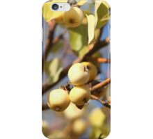 yellow apples  on the tree iPhone Case/Skin