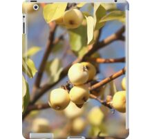yellow apples  on the tree iPad Case/Skin