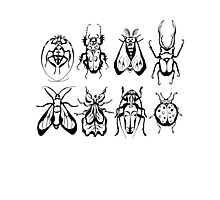Insect Collection Photographic Print