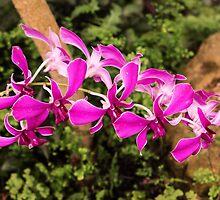 Purple orchid by Thad Zajdowicz