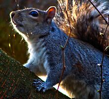 Squirell by drbeaven