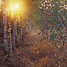 Birch Grove by Kasia Nowak