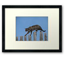 Tabby on Fence Ridge Walker  Series # 1 Framed Print
