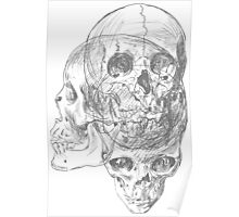 Anatomy Skulls Poster