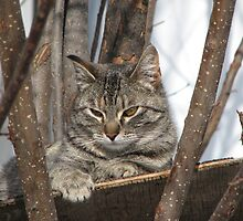 Cat Resting in the Trees by Andrielle