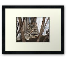 Cat Resting in the Trees Framed Print