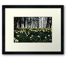 Spring Spledour Framed Print