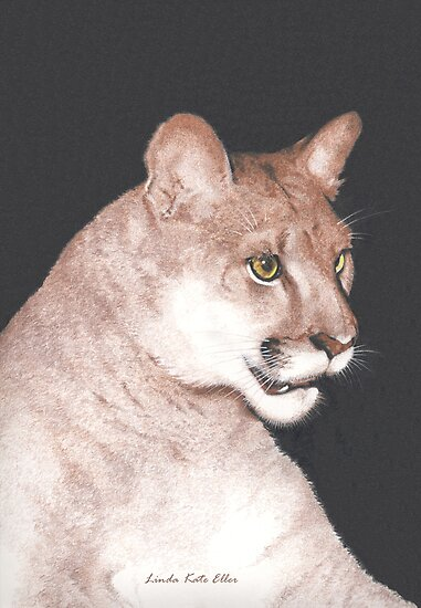 The Majestic Mountain Lion by Kate Eller