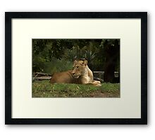 Born to be free. Framed Print