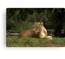 Born to be free. Canvas Print