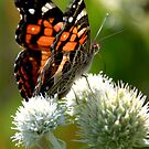 Just Another Pretty Butterfly by Curtiss Simpson
