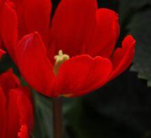 Friendship Tulips Sticker