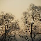 Spooky Trees by photographyjen