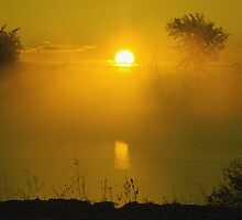 Sunrise, Orange, Misty Morning by Helena Haidner