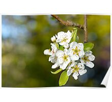 Apple Orchard Bloom Poster