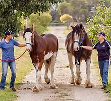 Clydesdales 09 by Yanni