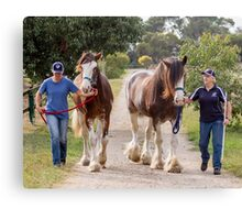 Clydesdales 10 Canvas Print