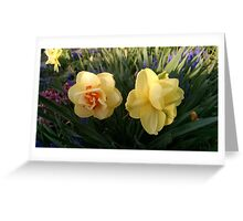 Double Double Daffodils Greeting Card
