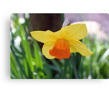 """""""Daffodil""""   Canvas Print"""