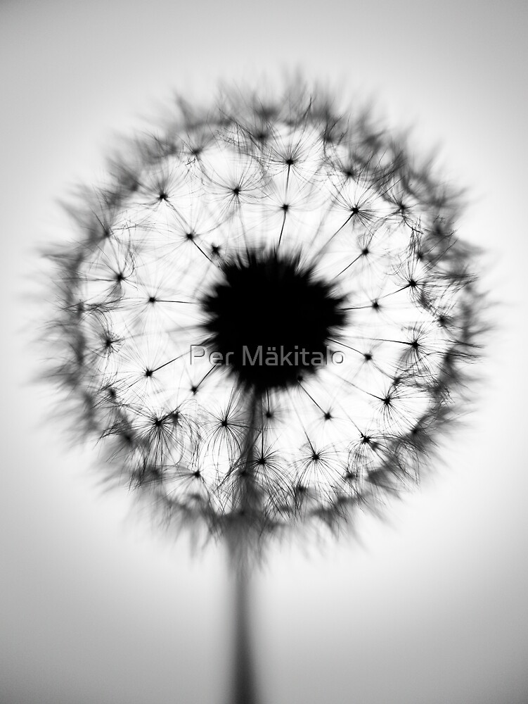 Dandelion by Per Mäkitalo