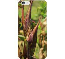Stalk of Corn iPhone Case/Skin