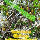 Banner - Winner - Ferns & Mosses Challenge - Not for Sale by MotherNature