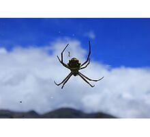 Orb Weaver Spider Against Blue Sky Photographic Print
