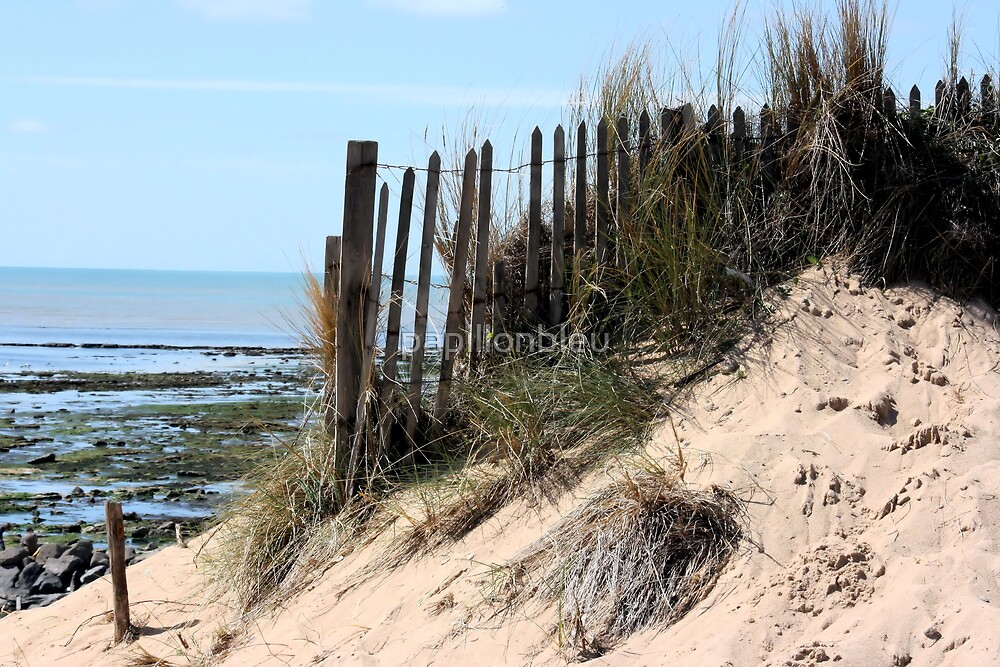 From the Dunes by Pamela Jayne Smith