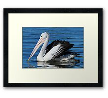 Beauty in motion = The Pelican Framed Print