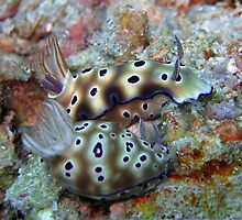2 nudibranches by Marcel Botman