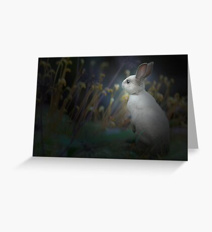 bun-bun -1661 Greeting Card