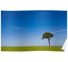 lonely tree in paddock Poster