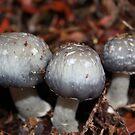 Little mushrooms by Silvia Solberg