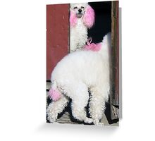 Two poodles in a hutong in Beijing Greeting Card