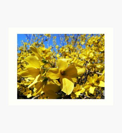 Yellow flowers in bloom Art Print