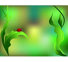 Ladybug sitting on a green leaf Photographic Print