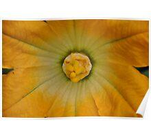 Zucchini flower Poster