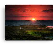 Seagull on Sunset - Sorrento - Mornington Peninsula Canvas Print