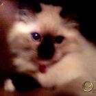 Pretty Kitty by Calliope-Oz