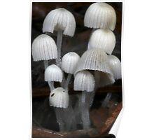Fungi Season 15 Poster