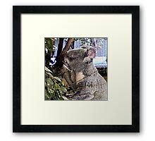 Adorable Koala Framed Print