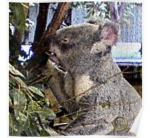 Adorable Koala Poster